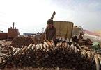 Trẻ em Syria thu lượm vỏ tên lửa, bom chưa nổ mưu sinh qua ngày