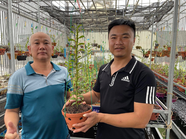 Chủ vườn lan Sài thành tiết lộ 4 yếu tố quan trọng để hoa phát triển tốt