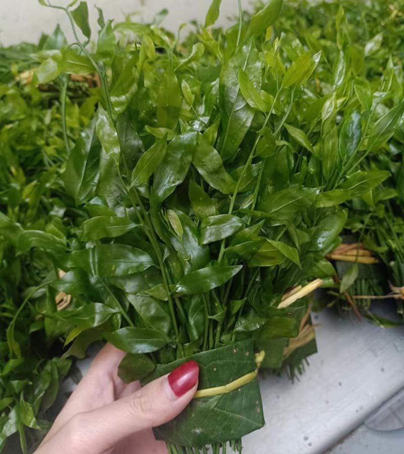 Món rau lạ trên rừng về Hà Nội, 200 nghìn/kg vẫn 'cháy hàng'