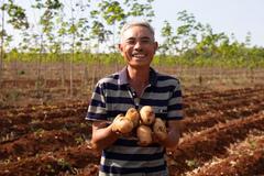 Nông dân Gia Lai phấn khởi vì được mùa khoai tây