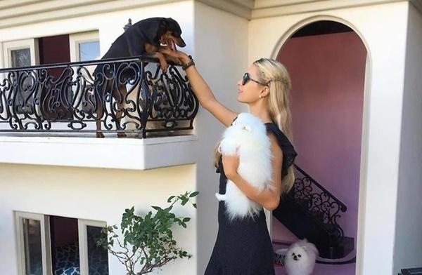 Chi 28 tỷ mua xe cho chó, gần 18 tỷ làm bồn cầu của sao Hollywood