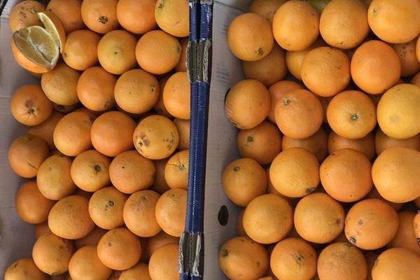 Cam Úc giá siêu rẻ bán dọc vỉa hè, tiểu thương tiết lộ sự thật
