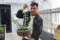 Gardener confirms mutant orchid transaction, promises to pay tax