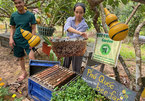 Farm offers fresh look at life of bees