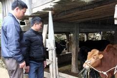 Hoàng Su Phì  đẩy mạnh chuỗi liên kết chăn nuôi gia súc an toàn sinh học
