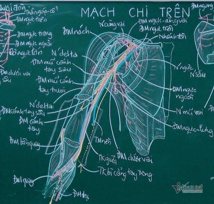 Thầy giáo giải phẫu lên lớp chỉ với… hộp phấn màu