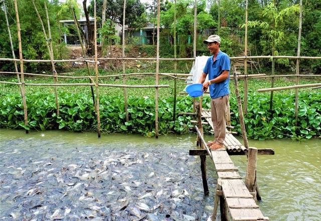 Kỳ lạ hàng nghìn con cá tra kéo đến 'nương nhờ' nhà dân và chỉ ăn chay