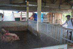 Đông Hưng: Tháng vệ sinh chống dịch bệnh cho đàn gia súc bắt đầu từ 10/3 – 10/4/2021