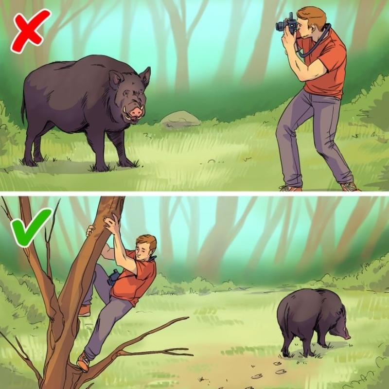 Bí quyết sống sót khi đụng độ động vật hoang dã