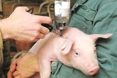 Thành phố Thái Nguyên triển khai tiêm phòng vaccine cho vật nuôi