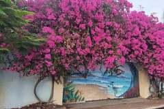 Hàng loạt cây hoa giấy ở Vũng Tàu bị kẻ gian cưa gốc