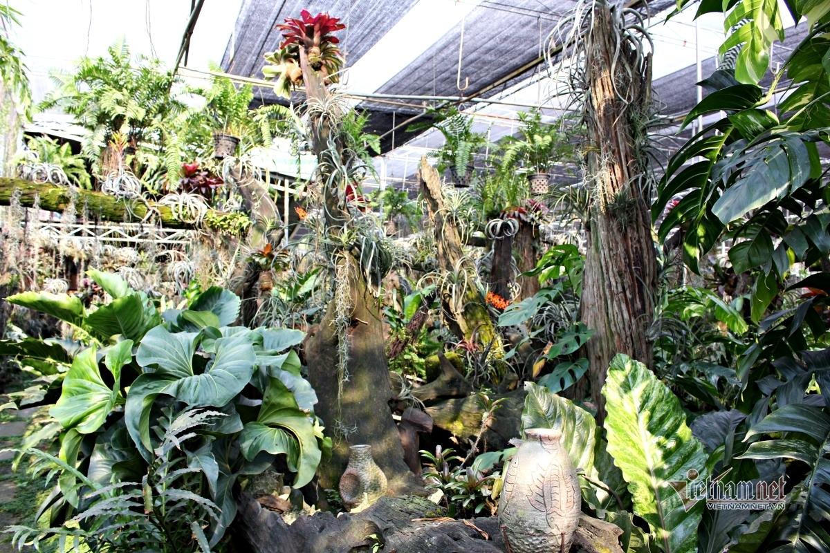 Khu vườn 'kỳ hoa dị thảo' của lão nông Sài Gòn