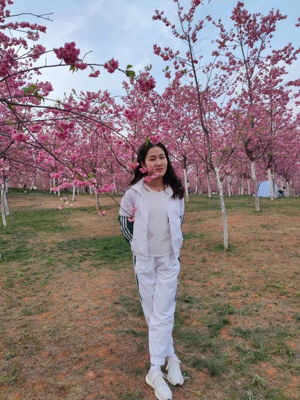 Hoa anh đào 'bung nở' tuyệt đẹp ở các trường đại học Trung Quốc