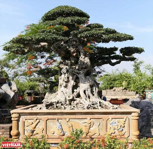 Hanoi travel,Hong Van bonsai village