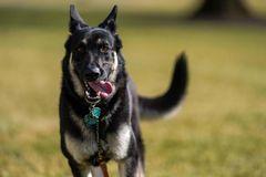 Chó cưng của ông Biden lại 'gây sự' ở Nhà Trắng