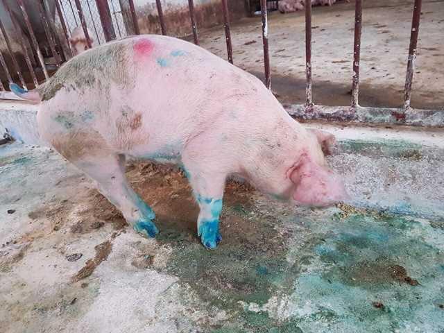 Thạch Hà huy động toàn hệ thống chính trị phòng, chống dịch bệnh trên gia súc