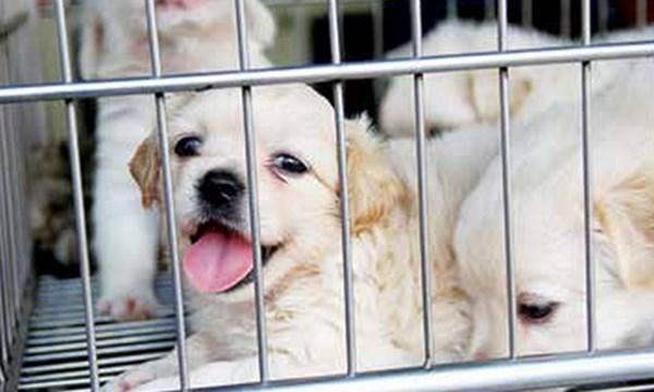 Từ tháng 4/2021, hành hạ chó mèo có thể bị phạt đến 3 triệu đồng