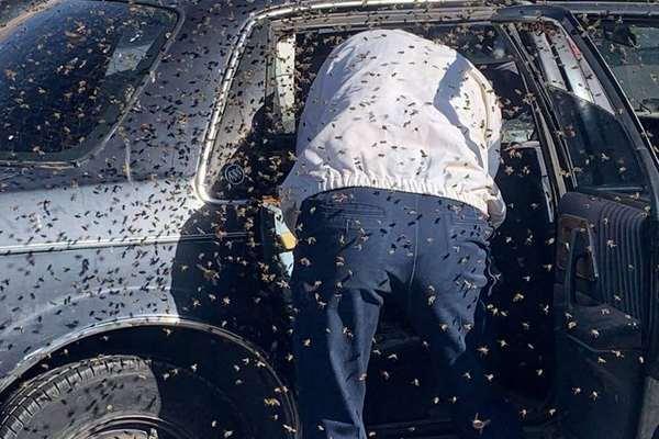 Bị đàn ong 15.000 con 'viếng thăm' khi vừa bước vào ô tô