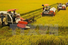 Vietnam aims to reduce greenhouse gas emissions in rice sector