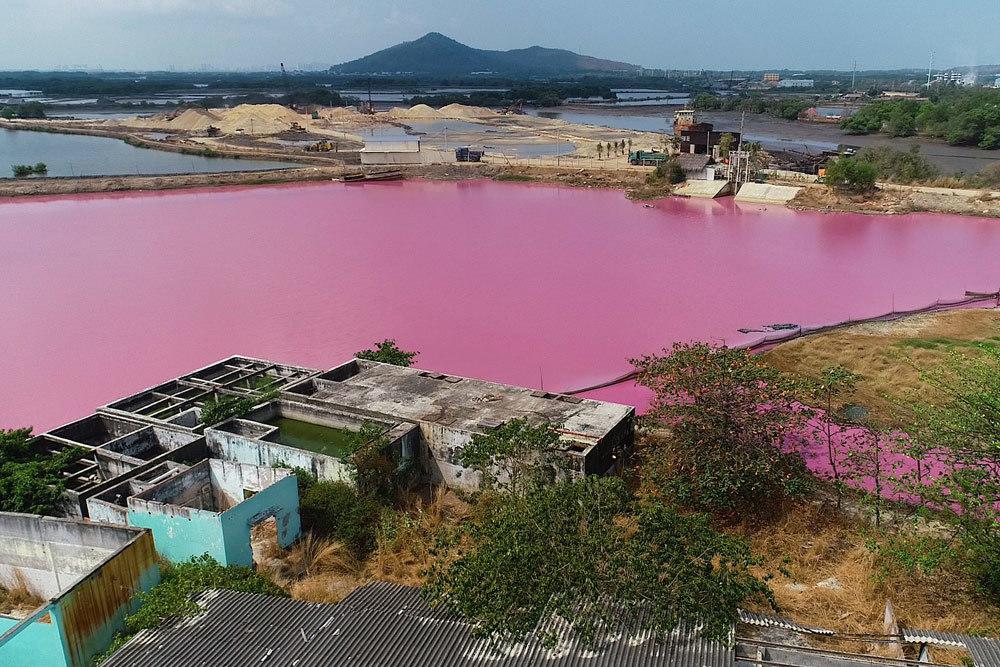 Đầm nước màu tím ngắt, kết đắng cho doanh nghiệp xả thải