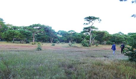 Chuyển mục đích gần 156ha rừng sản xuất làm sân golf Đak Đoa ở Gia Lai