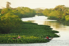 Fruit islands in Mekong Delta to explore