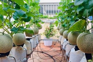 Cảnh trồng rau, nuôi gà, thả cá trên sân thượng của những 'nông dân phố'