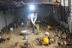Ấn tượng mô hình chăn nuôi an toàn sinh học bằng thảo dược