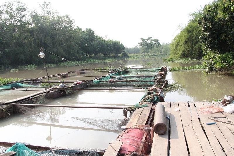 Hàng chục tấn cá lồng bè chết trắng trên sông Sài Gòn