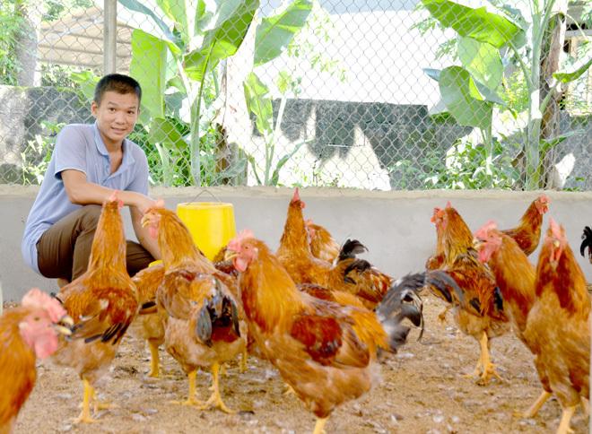 Tuyên Quang rốt ráo đối phó dịch cúm gia cầm