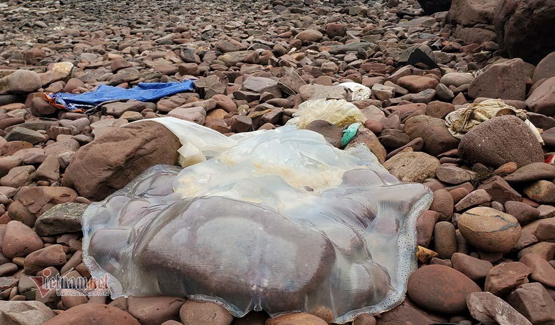 Cá chết dạt trắng bờ biển, ngư dân huyện Nghi Lộc ngừng ra khơi