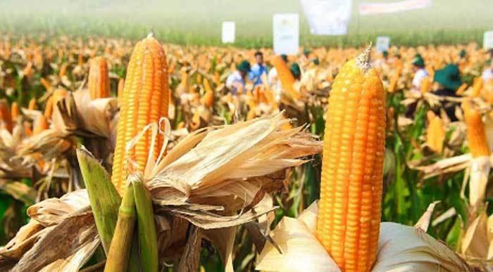 Một bước chuyển thế kỷ, nông dân thu thêm 19 tỷ USD
