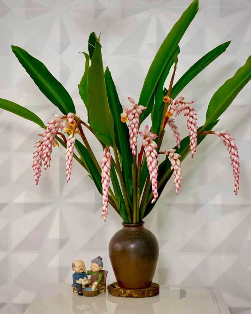 Hoa dại bờ bụi siêu đắt đỏ, mối buôn bán 2.000 cành/ngày