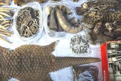 Thâm nhập thị trường buôn bán chế phẩm từ động vật hoang dã