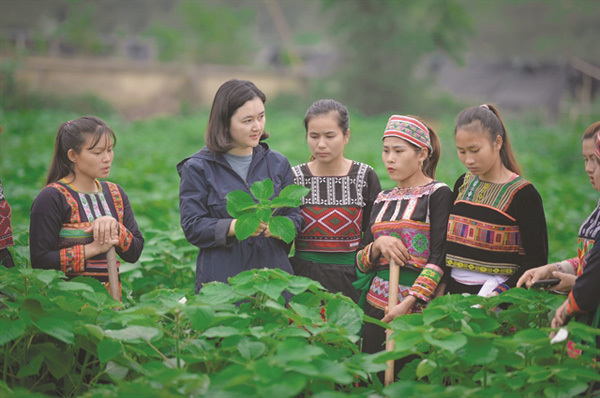 New crop keeps families together