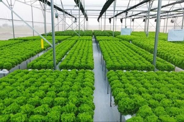 Khuyến khích phát triển mô hình kinh tế tuần hoàn trong nông nghiệp