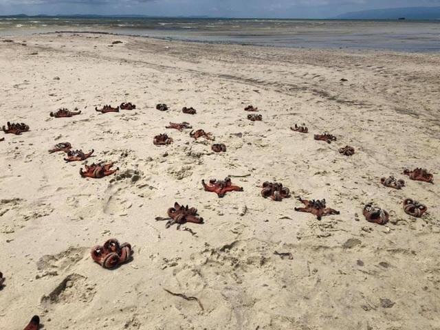 Sao biển ở Phú Quốc chết khô do du khách mang lên bờ chụp ảnh 'sống ảo'