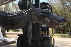 Mổ bụng cá sấu nặng 200kg, phát hiện lời giải cho nhiều vụ mất tích