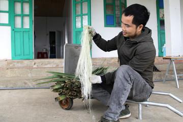 Độc nhất Việt Nam: Tách sợi lá dứa bỏ đi dệt thành hàng thời trang