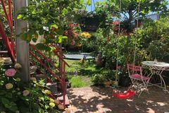 Khu vườn 100m2 tràn ngập hoa trái của mẹ Việt ở Hà Lan