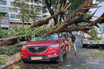 Ngăn 'thảm họa' mùa mưa bão, TP.HCM yêu cầu rà soát cây xanh nguy hiểm