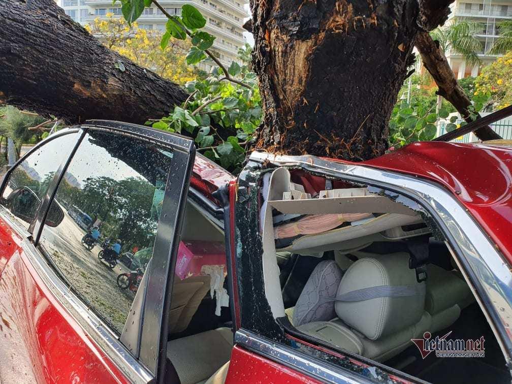 Cây xanh bật gốc trong mưa dông, đè bẹp ô tô 7 chỗ ở TP.HCM