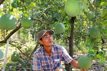 Trái cây đồng loạt giảm giá, đặc sản mà rẻ hơn rau