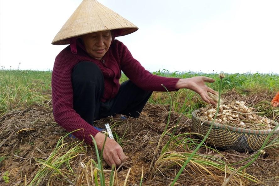 Đặc sản xứ Nghệ rẻ chưa từng có, đổ về Hà Nội rao bán khắp chợ