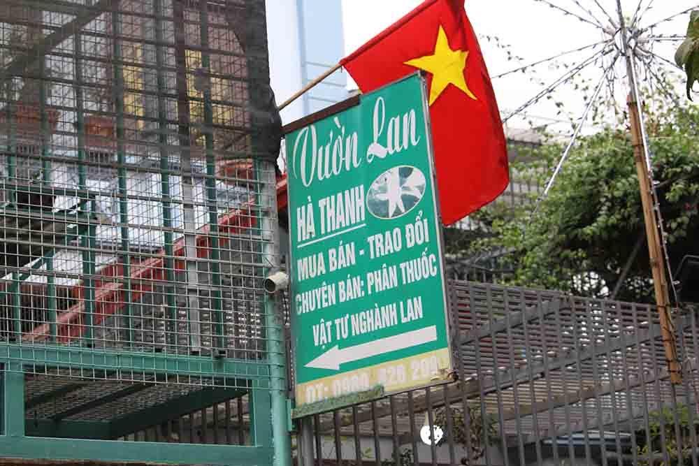 """Giám đốc Công an Hà Nội chỉ đạo làm rõ vụ """"ôm"""" trăm tỷ lừa bán lan đột biến"""