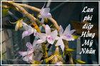 Lan đột biến là hoa gì mà làm bùng lên 'cơn sốt bạc tỷ' của người Việt?