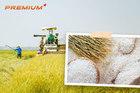 Biến gạo thành hạt ngọc trời để vươn lên số 1 thế giới