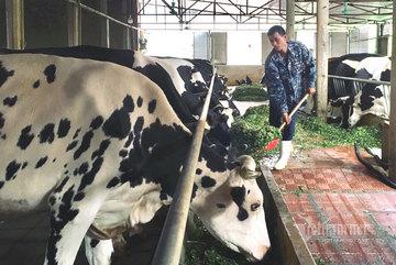 Liều vay 300 triệu làm ăn, 9 năm sau anh nông dân đếm tiền tỷ