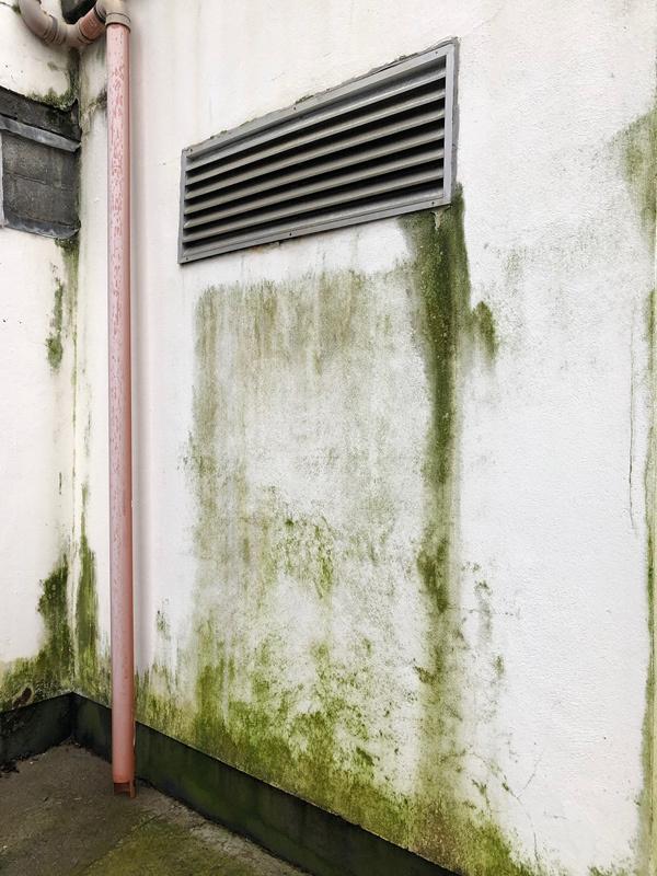 Cách phòng tránh hư hại thường gặp với sơn ngoại thất