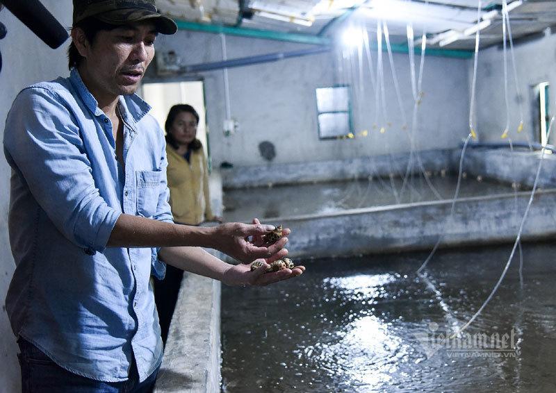 Hé lộ quy trình tạo ra 'kho báu' 34 tỷ đồng của lão nông Quảng Trị